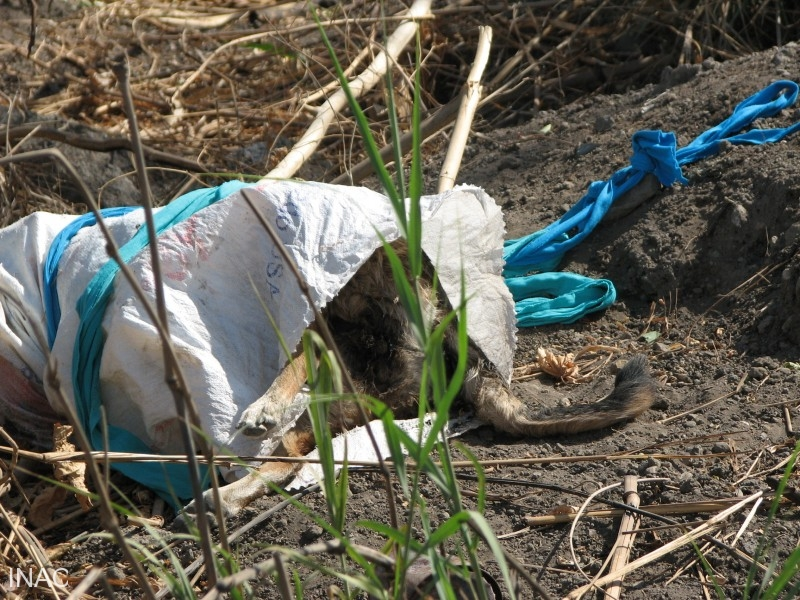 el-comite-de-peligro-aviario-debe-supervisar-que-no-existan-desechos-como-animales-muertos-que-signifiquen-un-foco-de-atraccion-para-aves-de-rapina